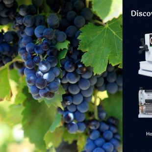 The best for your cellar, from Grifo!