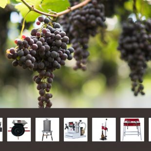 From harvest to bottling!